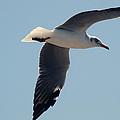 Seagull Flying by Trevor C Steenekamp