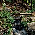 Stream In Tall Pines by Ron Weathers