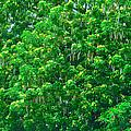 Tibit Tree by David Alexander