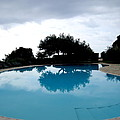 Tree At The Pool On Amalfi Coast by Tanya  Searcy