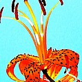 Turquoise And Tiger Lily by Chris Berry