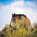 Wild Horse In The Sage by Steve McKinzie