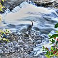 0005 Blue Heron At Glen Falls Williamsville Ny by Michael Frank Jr