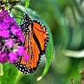 001 Making Things New Via The Butterfly Series by Michael Frank Jr