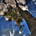 001 Reaching For The Sky by Michael Frank Jr