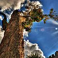 002 Reaching For The Sky by Michael Frank Jr