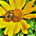 003 Busy Bee Series by Michael Frank Jr