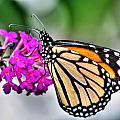 004 Making Things New Via The Butterfly Series by Michael Frank Jr