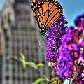 008 Making Things New Via The Butterfly Series by Michael Frank Jr