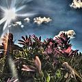 008 Summer Sunrise Series by Michael Frank Jr
