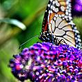 012 Making Things New Via The Butterfly Series by Michael Frank Jr