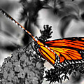 014 Making Things New Via The Butterfly Series by Michael Frank Jr