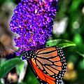 015 Making Things New Via The Butterfly Series by Michael Frank Jr