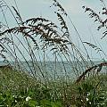 019 Sea Oats by Carol McKenzie