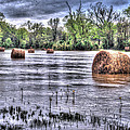 0804-3586 Flooded Hay by Randy Forrester