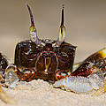 A Crab On The Shore  by U Schade