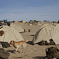 A Dog Handler And His Military Working by Stocktrek Images
