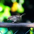 A Little Birdie Told Me by Bill Cannon