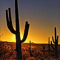 A Saguaro Sunrise  by Saija  Lehtonen