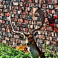 Against The Wall by Isabella F Abbie Shores