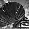 Aldeburgh Scallop by Darren Burroughs