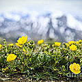 Alpine Meadow In Jasper National Park by Elena Elisseeva