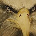 American Eagle by Jody Domingue