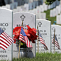 American Flags Placed In The Front by Stocktrek Images