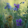 An Attwaters Prairie Chick Surrounded by Joel Sartore