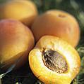 Apricots by Veronique Leplat