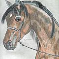 Arabian Horse by Don  Gallacher