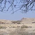 Aravah Desert Landscape  by Shay Levy