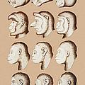 Artwork Of Twelve Catarrhines, 1870 by Mehau Kulyk