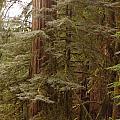 Ashland Oregon by Rose Jones