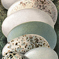 Assorted Birds' Eggs, Historical Art by Sheila Terry
