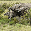 At The Waterhole by Michele Burgess