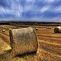 August Field by Svetlana Sewell