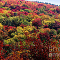 Autumn Along The Highland Scenic Highway by Thomas R Fletcher