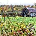 Autumn Along Tioga Road by Thomas R Fletcher