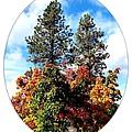Autumn Beginnings by Will Borden