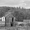 Autumn Farm Monochrome by Steve Harrington