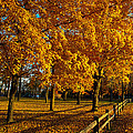 Autumn Fence by Phil Koch