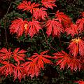 Autumn Leaves by David Resnikoff