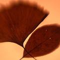 Autumn Leaves by Tamarra Tamarra
