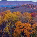 Autumn Palette by Marcia Mello
