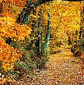 Autumn Pathway by Cheryl Davis