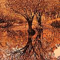 Autumn Reflections by Douglas Barnard