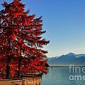 Autumn Tree by Mats Silvan