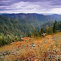 Autumn Whispers by Idaho Scenic Images Linda Lantzy