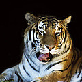 Awaking Tiger by Suanne Forster